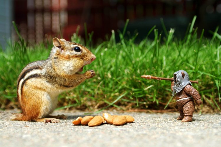 Squirel Funny And Doll