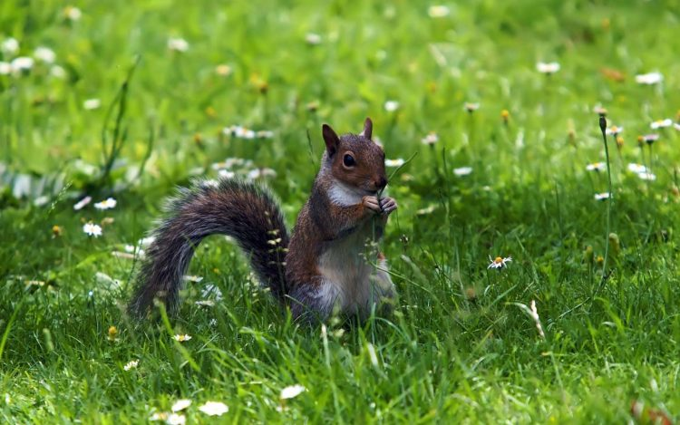 Herbe Walk Squirrel de lAlimentation