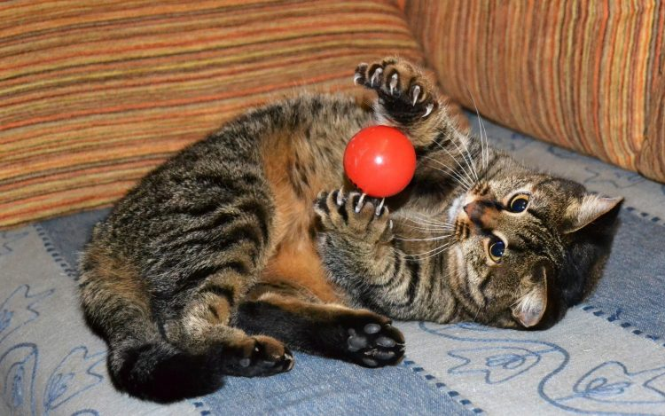 Kitten Ball Ball Jeu