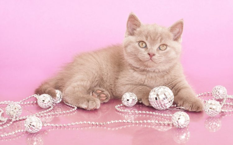Kitten perles bijoux Look Photoshoot