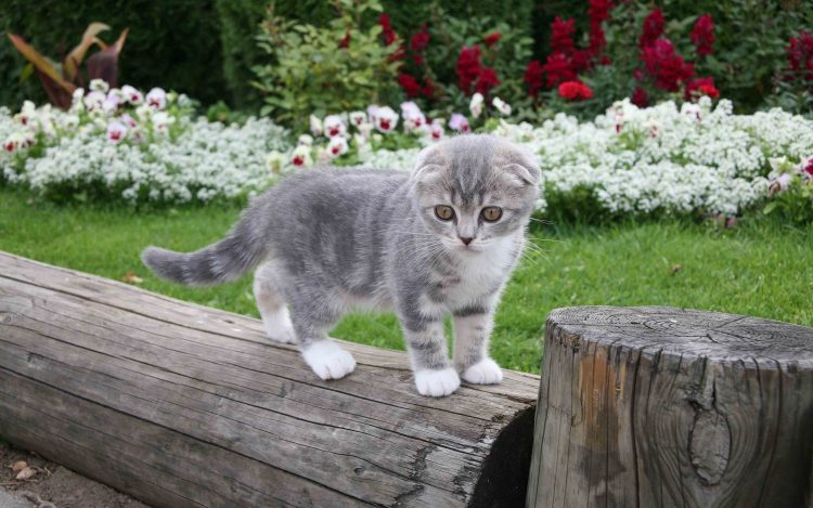 Kitty Little Furry herbe des fleurs Mignon